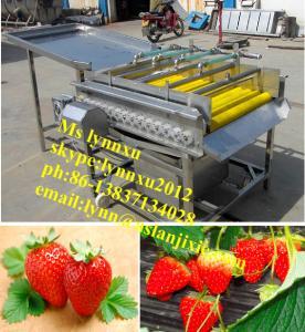Fruit vegetable washing machine Manufactures