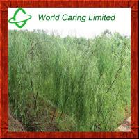 China Herbal Ingredient Natural White Willow Bark Extract salicin 10%-98% HPLC on sale