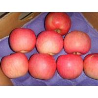Chinese Red Fuji Apple Manufactures