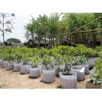 China Fashionable Design  Plant Grow Bags 0.1 - 3.5mm Thickness Optional Color on sale