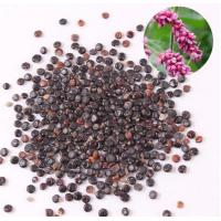 China Prince's-feather Fruit Polygonum orientale Linn seed herbal medicine shui hong hua zi on sale