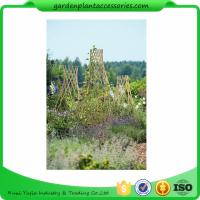 Straight Garden Bamboo Stakes Manufactures