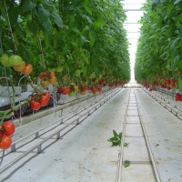 China UV radiation protection layer Multi-span greenhouses 120km/h polycarbonate greenhouse on sale