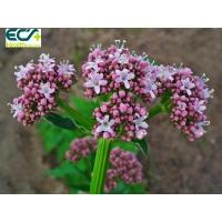 China Sedative Valerian Root Herbal Supplement Functional Food Ingredients For Beauty Effect on sale