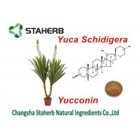 Quality Yucca Schidigera Extract Natural Feed Additives Yocoin Yucca Powder for sale