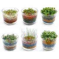 China Free shipping negative ion generation three plant,office plants green gift,DIY potted plant on sale