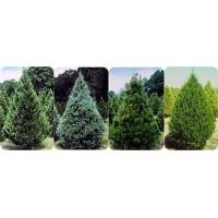 hang down artificial pine small branch Manufactures