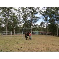 Portable Horse Pens For Sale Heavy Duty 6 Oval Rail - Cattle Yards Horse Panels Round Manufactures