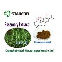 Rosmarinus Officinalis L Rosemary Leaf Extract , Rosemary Antioxidant Extract Manufactures