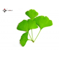 24% Flavonoids Water Soluble Ginkgo Biloba Extract Manufactures
