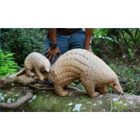 life size animal statue  pangolin props model fiberglass nature painting as decoration statue in garden Manufactures