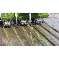 Quality single planting arms paddy rice transplanter 6 rows, row space 120mm-170mm for sale