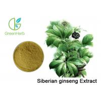 Eleutherococcus Senticosus Siberian Ginseng Extract Brown Yellow Powder Manufactures