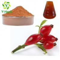 Rosa rugosa thunb Bulk Rosehip Powder 10% UV Rose Hip Extract Flavone Manufactures