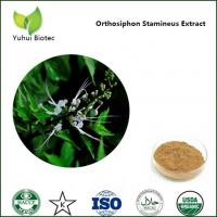 China Orthosiphon Stamineus P.E.,Java Tea extract,Clerodendranthus spicatus extract on sale