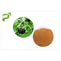 Quality Siberian Ginseng Powdered Herbal Extracts Acanthopanax Senticosus Eleutheroside B/E for sale