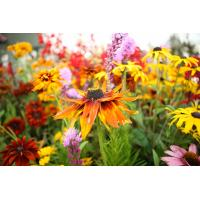 Nature Big Wood Core Flower Box in sets Manufactures