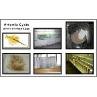 Quality Artemia cysts for sale