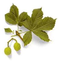 China Horse Chestnut Extracts on sale