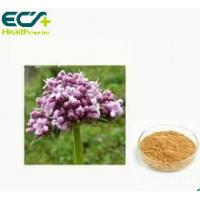 China Valerian Extract Premium Health Supplements Valeriana Officinalis L For Mood Health on sale