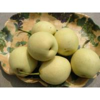 Chinese Ya Pear Manufactures