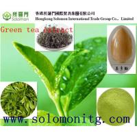 China Organic Green tea extract, with active ingredients EGCG, L-theanine, Tea Polyphenol on sale