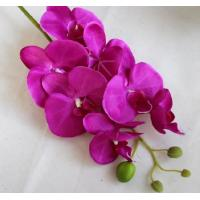 Quality Small butterfly orchid,seven head butterfly orchid,Dried flowers, Simulation for sale