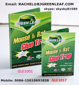 China Mouse Glue Trap  Email:rachel@bjgreenleaf.com on sale