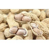 Spiced Peanut Microwave Baking Equipment Manufactures