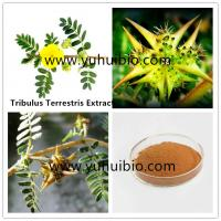 puncturevine weed extract protodioscin China supplier, Cheap wholesale puncture vine extract Manufactures
