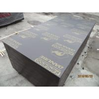 kangaroo film faced plywood & marine plywood for construction use Manufactures