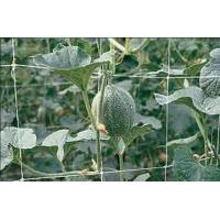 China Climbing Plant Support Netting Green / White For Greenhouse , Garden on sale