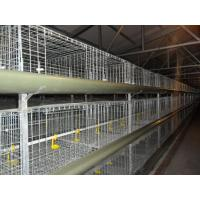 Quality H Type Cages for Growing Broilers for sale