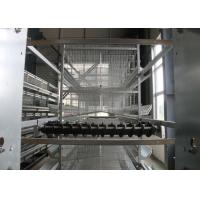 Automatic Layer Chicken Cage  Hen Poultry Cage Construction For Farm Manufactures