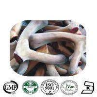 GMP factory supply Velvet antler extract Manufactures