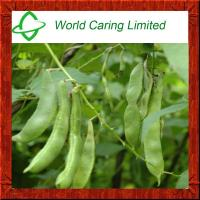 Weight Loss Ingredient White Kidney bean extract Herbal Extract Manufactures