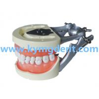 Good price dental jaw model Manufactures
