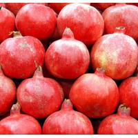 Pomegranate Extract/p.e./powder supplier Manufactures