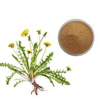 China EOS Certification Dandelion Root Extract Pure Organic Powder For Lower Blood Pressure on sale