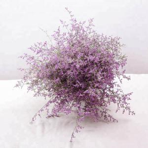 Fresh promotional fresh cut flowers   limonium Love grass hot selling Manufactures