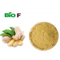 Instant Vegetable Extract Powder Non - Polluted Dried Oganic Ginger Powder Manufactures
