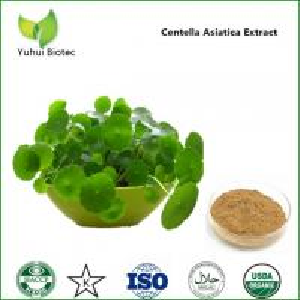 gotu kola herb extract,herba centellae extract,centella asiatica powder Manufactures