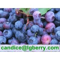 Quality 100% Pure organic blueberry concentrate/pure blueberry juice for sale