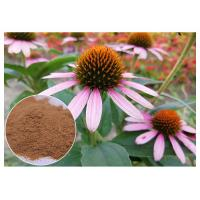 Chicory Acid Antifungal Plant Extracts Echinacea Pururea Powder From Whole Herb Manufactures
