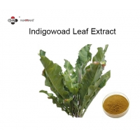 Antibacterial 98% Indigowoad Pure Herbal Extracts Manufactures