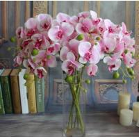 Buy cheap Small butterfly orchid,seven head butterfly orchid,Dried flowers, Simulation from wholesalers