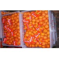 Organic Health Benifit Fresh Mandarin Oranges Contains Energy Iron , Zinc , Sodium Manufactures