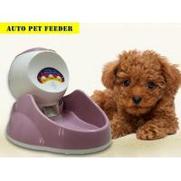 China Auto Pet Feeder on sale