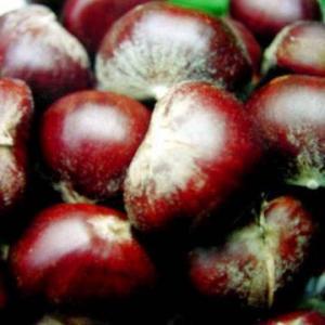 Fresh Chestnut Manufactures