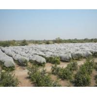 Eco Friendly Agriculture Non Woven Fabric With 1% - 4% UV Treated OEM / ODM Available Manufactures